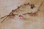 Branche de pommier  - Pigments sur toile - 33 x 24