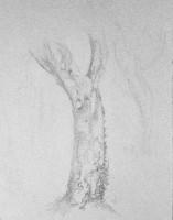 Chêne liège - crayon noir sur papier gris - 24 x 32 >>> 08-2003