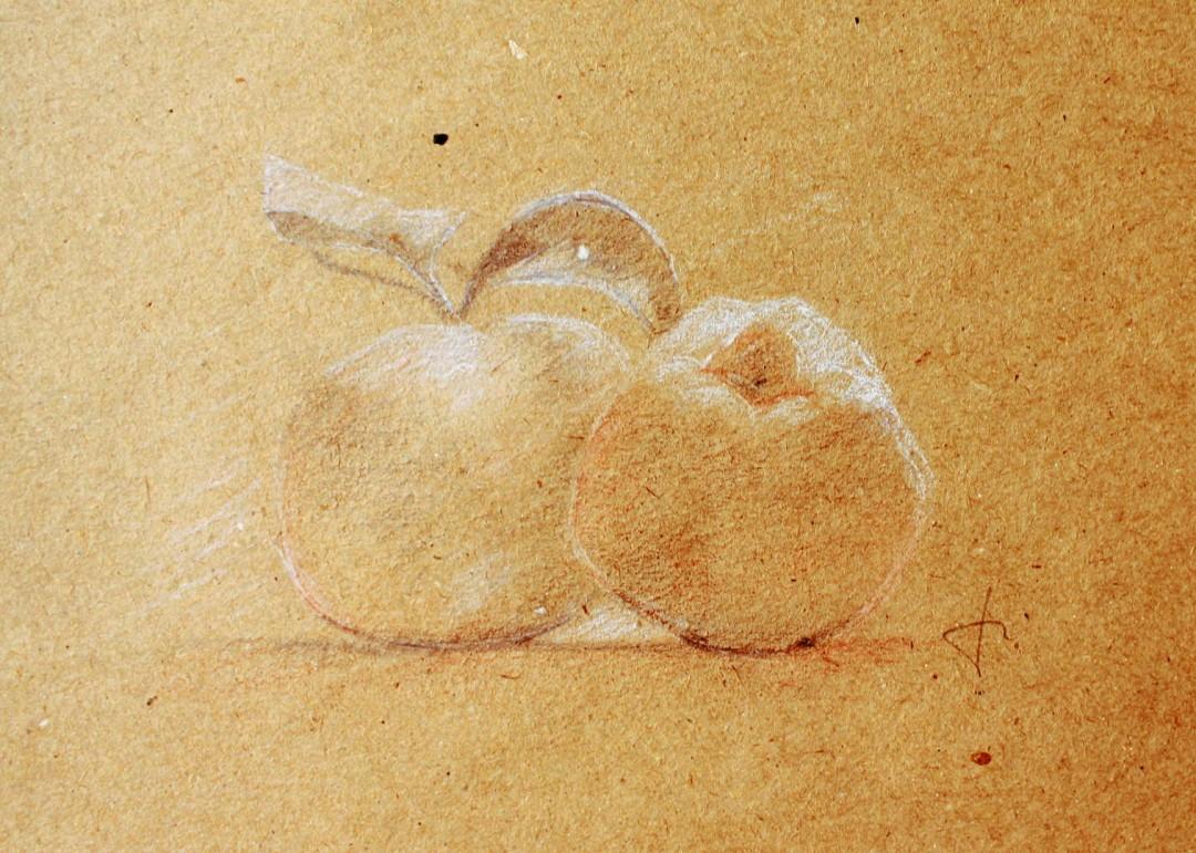 Pommes - Crayon noir sanguine et craie - 21 x 16